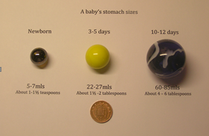 Baby's somach sizes